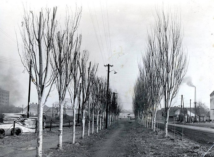 Protest proti výrubu stromov