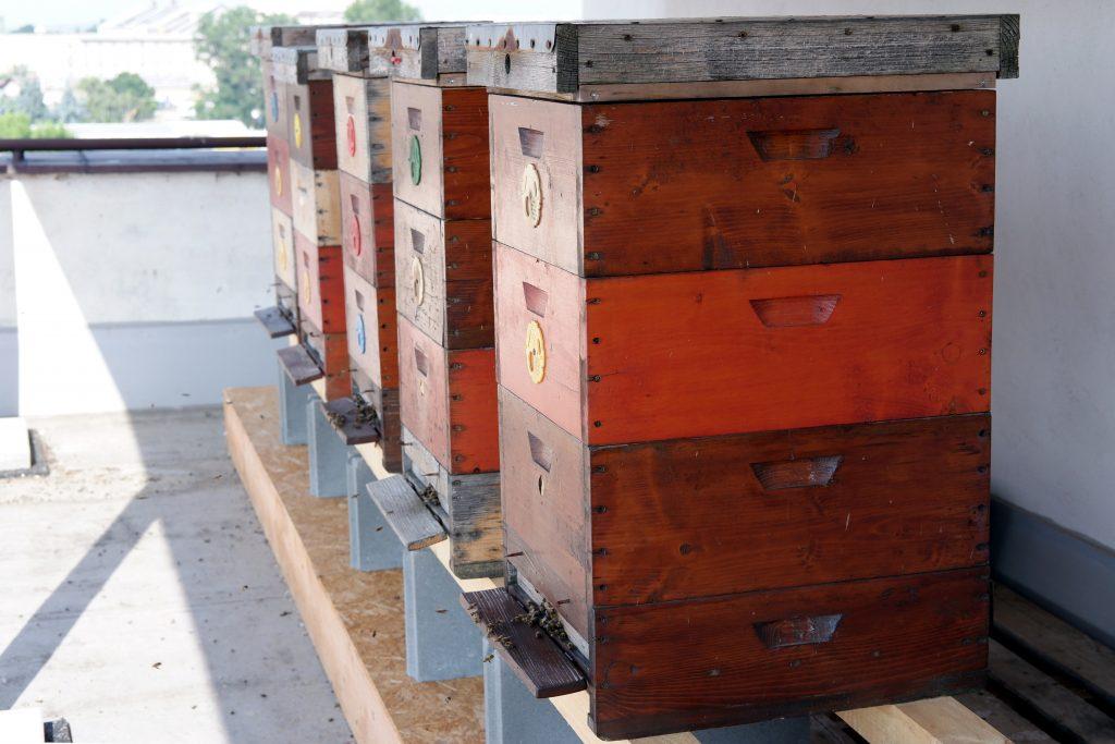 uni včely