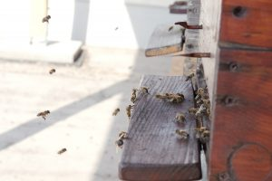 ucm uni včely